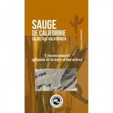 Sauge de Californie x2 rameaux